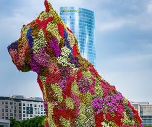 animals, flowers, and jeff koons image
