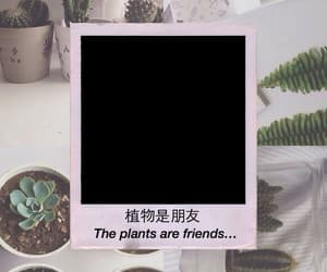 plants, texture, and friends image