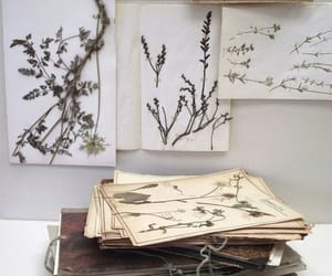drawning, plant, and weed image