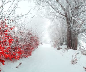 photography, seasons, and winter image