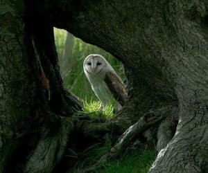 owl and trees image