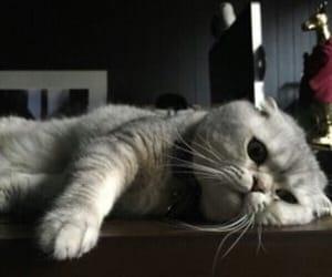 cat, animal, and sad image