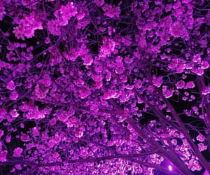 cherry blossoms, flowers, and night image