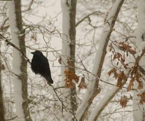 bird, black, and black bird image