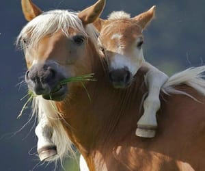 horse, animal, and hug image