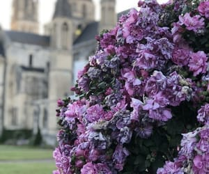 beautiful, castle, and flowers image