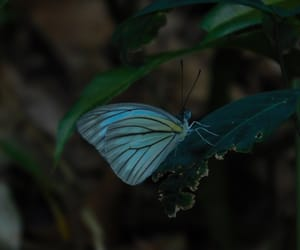 blue, bright, and butterfly image