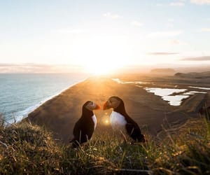 animals, romance, and travel image