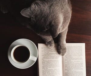 book, cat, and coffee image
