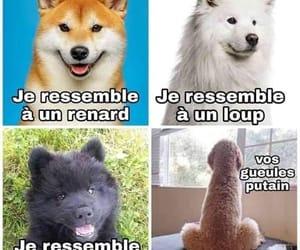 chien, francais, and blague image