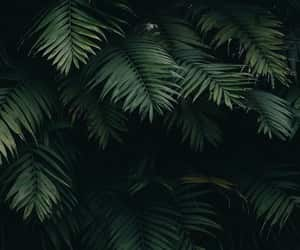 palm trees, palms, and palmtrees image