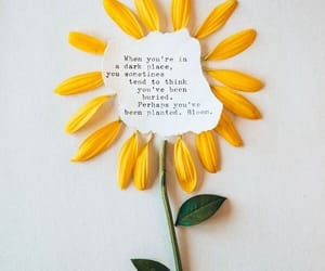quotes, bloom, and flower image