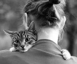 cat, girl, and hug image