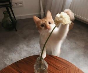 animals, love, and cat image