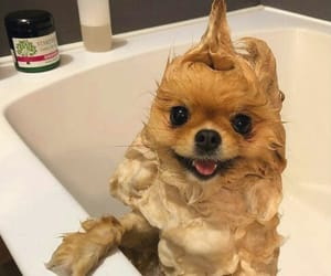 adorable, animal, and bath image