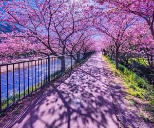 beautiful, blossom, and japan image