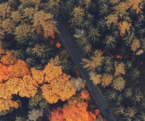 aesthetic, colors, and autumn image