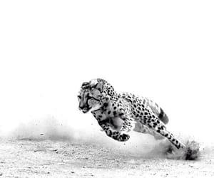 ambition, animal, and white image