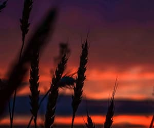 orange, sunset, and wallpaper image