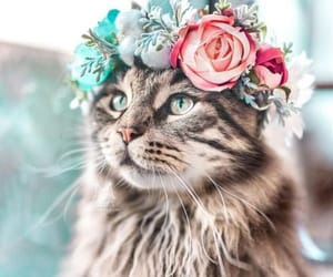 Crown cat