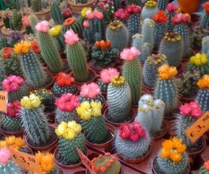 cactus, flowers, and ☀ image