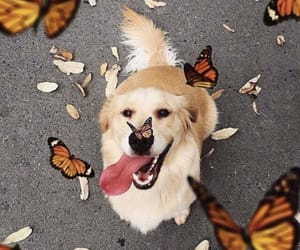 butterfly, dog, and doggy image