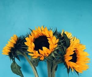 flower, sunflower, and wallpaper image