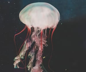 dark, jellyfish, and marine animals image