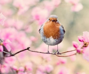 bird, hello, and pink blossoms image