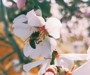 almond, bae, and bee image