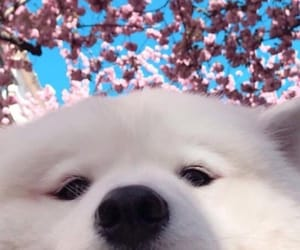aesthetic, animals, and blossom image