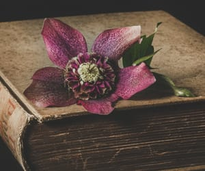 flower, vintage, and antique book image