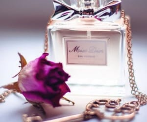 collection and perfume image