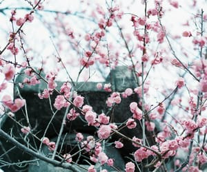 blossom, kyoto, and landscape image