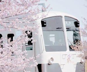 train, japan, and sakura image