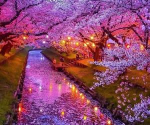 japan, pink, and nature image