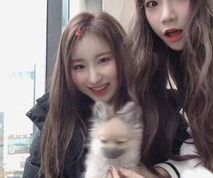 yuri, izone, and chaeyeon image