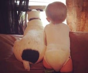 animals, baby, and dog image