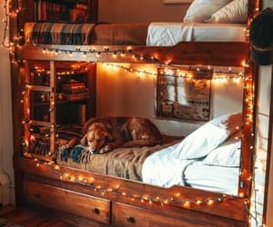 dog, bedroom, and home image