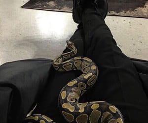 aesthetic, snake, and draco malfoy image