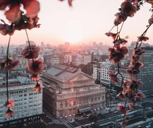 city, flowers, and nature image