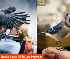 advertisements, graphic design, and animal ads image