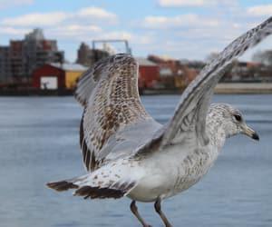 bird, blue, and ocean image