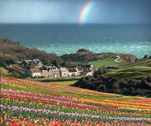 photography, nature, and rainbow image