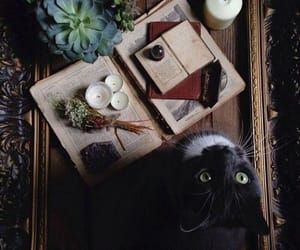 magic, cat, and candle image