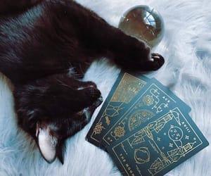 black cat, familiar, and card image