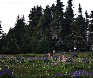 animals, forest, and green image