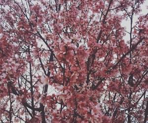 aesthetic, dark, and flower image