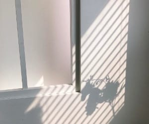 aesthetic, white, and shadow image