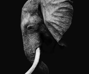 animals, black and white, and elephant image